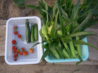 収穫12_06_08