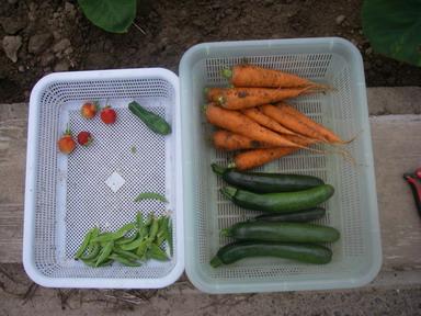 収穫12_06_14