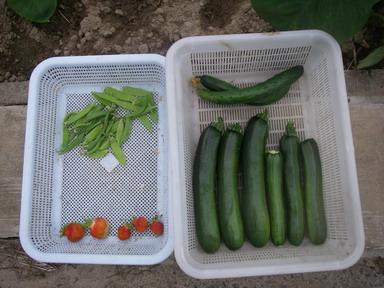 収穫12_06_15