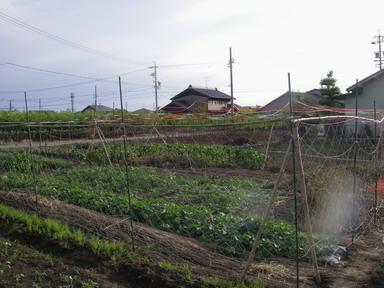 スイカ畑12_06_17