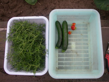 収穫12_06_17