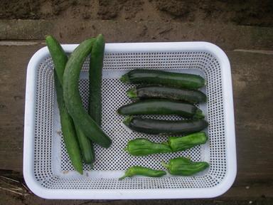 収穫12_06_20