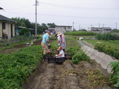 ジャガイモ掘り12_06_24