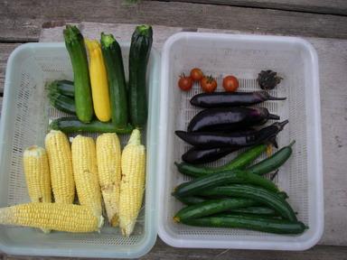 収穫12_06_28