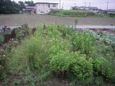 菊畑12_07_22