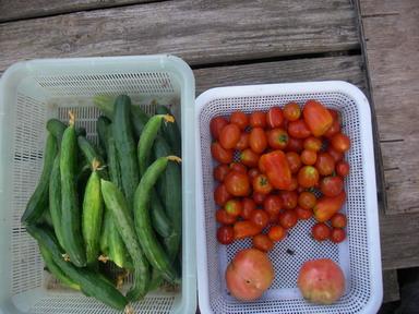 収穫2_12_07_26