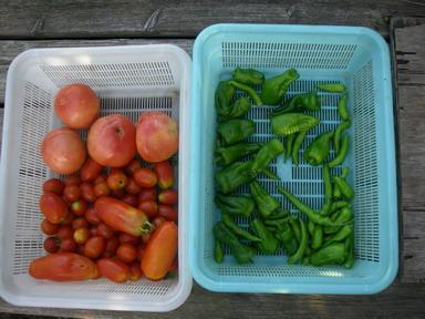収穫2_12_08_01