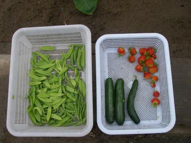 収穫12_06_09