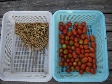 収穫2_12_08_02