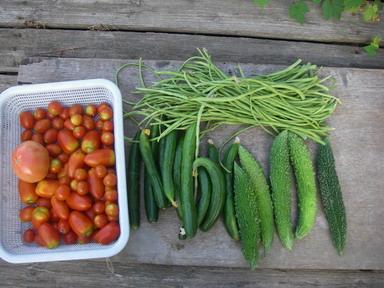 収穫1_12_08_03