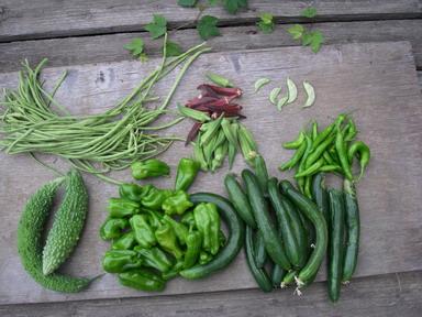 収穫夏野菜12_08_04