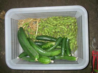 収穫12_08_05