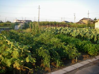 畑の様子12_08_07