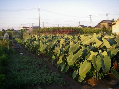 畑の様子2_12_08_07