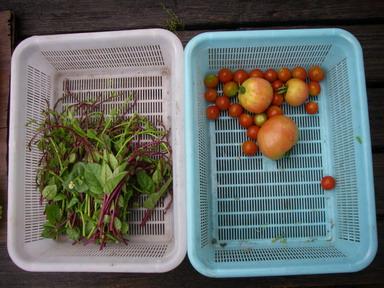収穫2_12_08_06