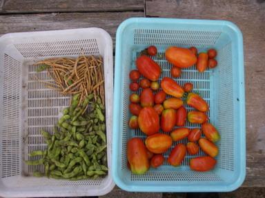 収穫2_12_08_08