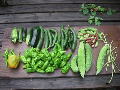 収穫夏野菜12_08_11