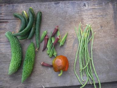 収穫夏野菜12_08_12