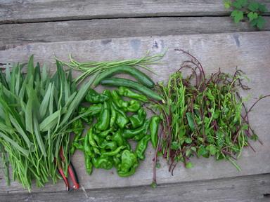 収穫夏野菜12_08_13