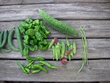 収穫夏野菜12_08_16