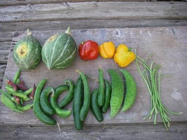収穫夏野菜12_08_17