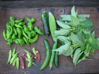 収穫夏野菜12_08_18