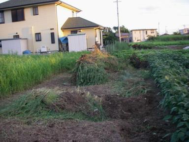 草刈後12_08_19