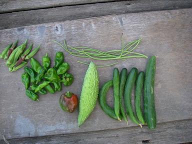 収穫夏野菜12_08_21