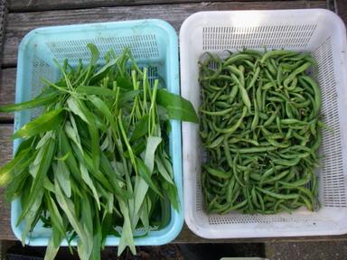 収穫2_12_08_20
