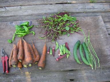 収穫1_12_08_20