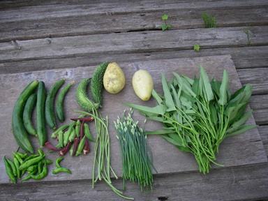 収穫夏野菜12_08_23