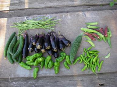 収穫夏野菜12_08_26