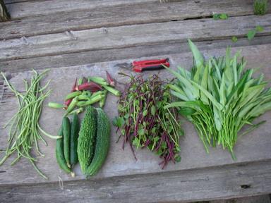 収穫夏野菜12_08_27