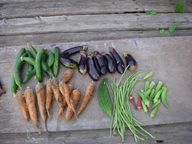 収穫夏野菜12_08_28