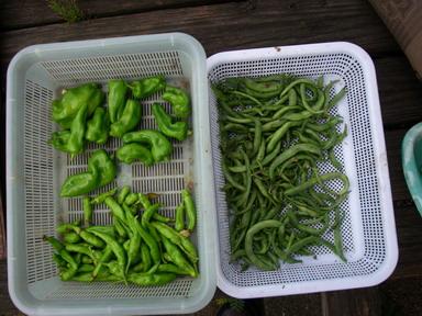 収穫2_12_08_30