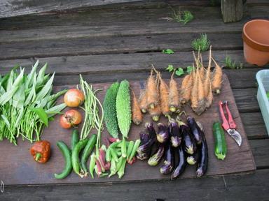 収穫夏野菜12_08_30