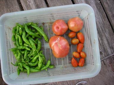 収穫2_12_09_01