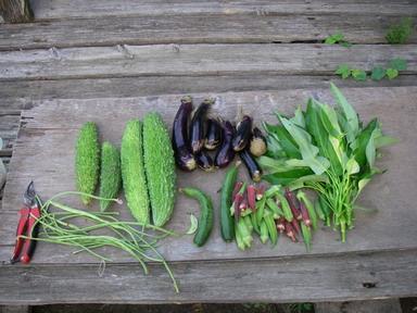 収穫12_09_01