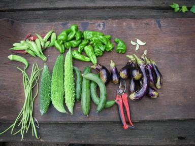 収穫夏野菜12_09_02
