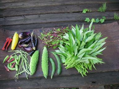 収穫夏野菜12_09_03
