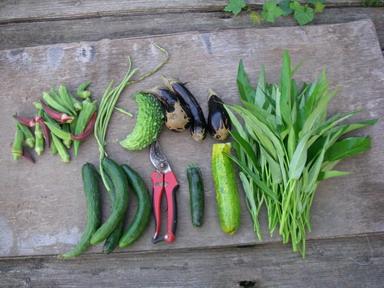 収穫1_12_09_05