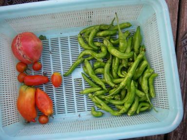収穫2_12_09_05