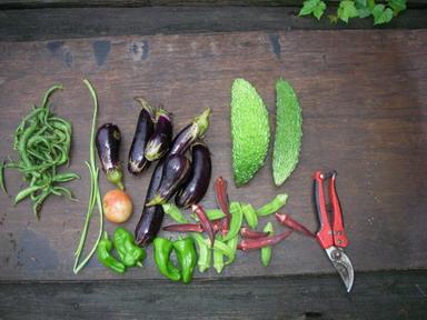 収穫1_12_09_04