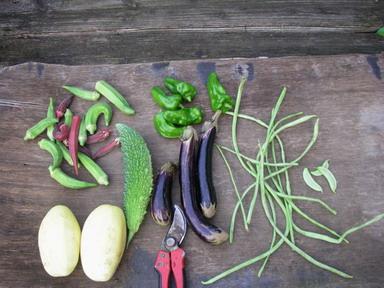 収穫12_09_06