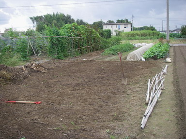 スイカ畑撤去1_12_09_09