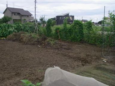 スイカ畑撤去後2_12_09_09