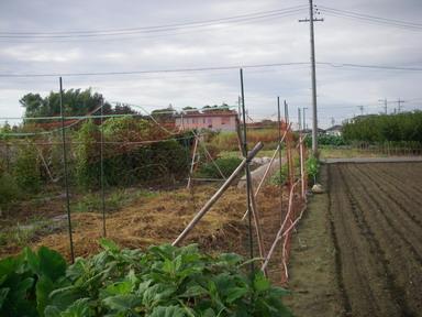 トマト畑撤去前12_09_09