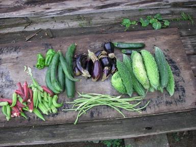収穫夏野菜12_09_09