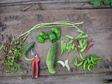 収穫12_09_10