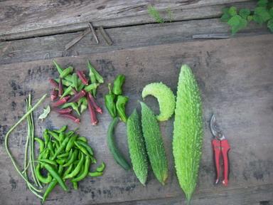 収穫12_09_13